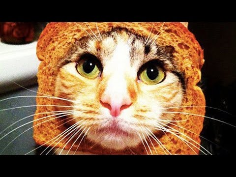 Cats vs Toaster 🐱 Cats Getting Scared by Toasters 😂 [Funny Pets]
