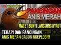 Terapi Anis Merah Biar Cepat Bunyi Ngeplong Gacor Teler  Mp3 - Mp4 Download