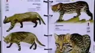 Guia de Animais Silvestres