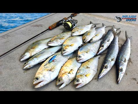 Super Ultralight Fishing | School Of Fish | Shore Jigging
