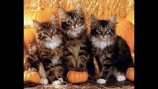 Короткие ролики для любителей кошек.
