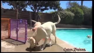 Perros que aman bañarse! Los perros mas lindos - Videos de Risa Gatos y Perros
