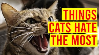 10 Things Cats Hate You Should Avoid Doing/ All Cats
