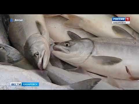 Вести-Хабаровск. Летняя путина под запретом