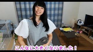 ウチの嫁がうさぎのまーちくんの爪を切る動画