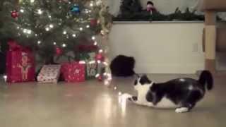 Кошки против ёлок!смотреть видео про кошек Прикольное видео
