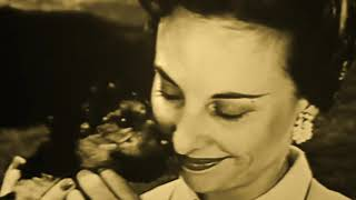 "Tomahawk ""Dog Eat Dog"" (Official Video)"