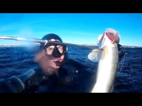 видео подводная рыбалка на волге
