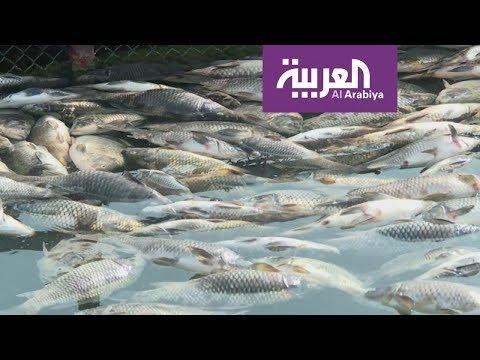 أسماك الفرات تغرق المزارعين بالخسائر والمحققين بالفرضيات  - 19:54-2018 / 11 / 4
