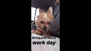 Puppy Oscar Bieber playing with cousins & going to work with Mom Hailey Baldwin Bieber February 2019