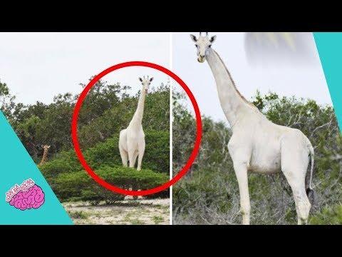 حتى العلماء تعجبوا ! أندر 10 حيوانات باللون الأبيض!!