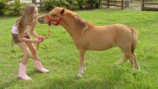 Миниатюрные лошадки (мини-лошади)