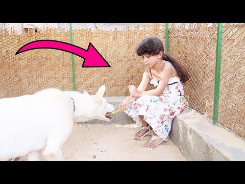 طفله عمرها ٤ سنوات تعطي كلب شرس الاكل ( عطيتها 500 ريال ) !!