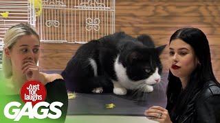 Cat Eats a Pet Bird Prank!!