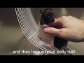 """Pet Rats 