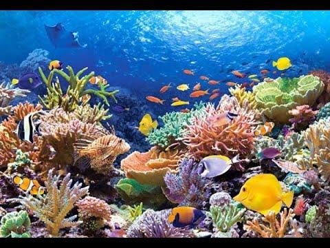Unterwasser Doku