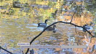 Bonnelles : les étangs classés en réserve naturelle