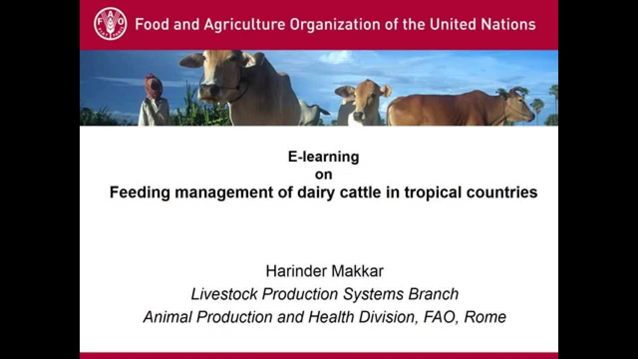 feeding management of dairy cattle pdf