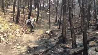 Rescate de fauna en bosque La Primavera