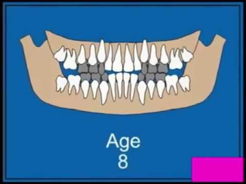 Смена молочных зубов на постоянные