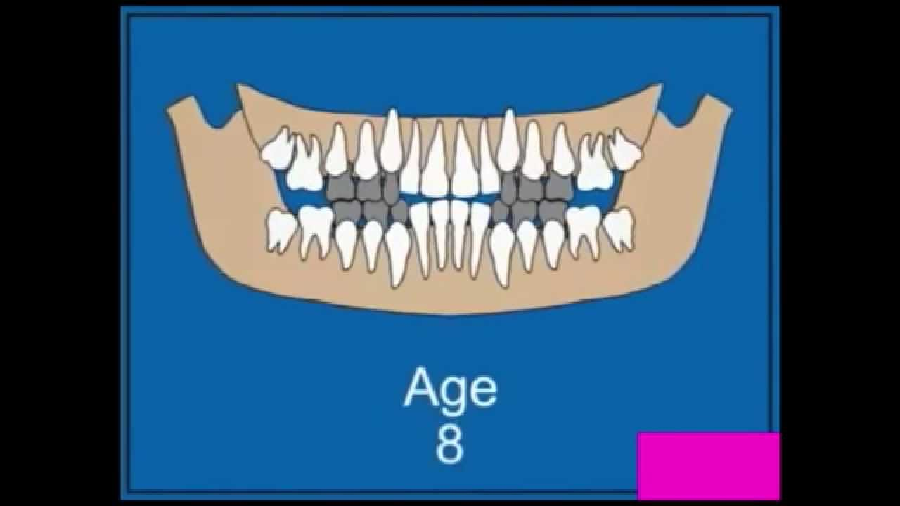 Замена молочных зубов у детей схема фото 887