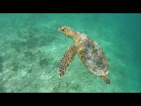 Centara Grand Island Resort &a Spa Maldives 2017