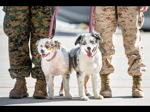 Meet Dogs on Deployment, a nonprofit that takes care of pets while their owners are deployed