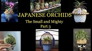 Japanese Orchids. The Small and Mighty. Part 3 of 3