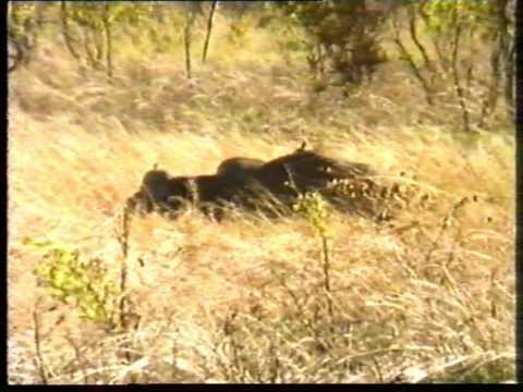 Zambezi valley Hunt