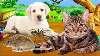 Dạy bé học các con vật yêu thích nhất - động vật rừng - vật nuôi trong gia đình