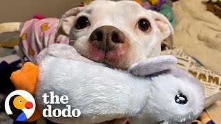 Skinny Abandoned Pit Bull Gets Everything She Dreamed Of | The Dodo Pittie Nation