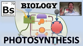 Photosynthesis: Overview
