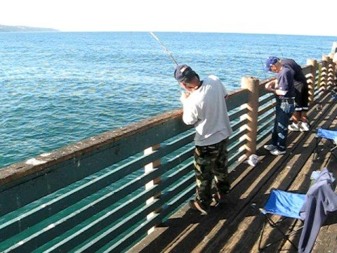 Catch and release pacific mackerel at redondo beach pier for Redondo beach fishing report