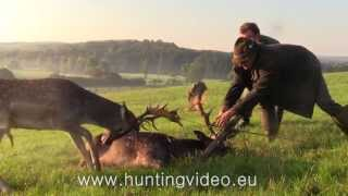 Fallow Buck Rescue in Hungary (HD)