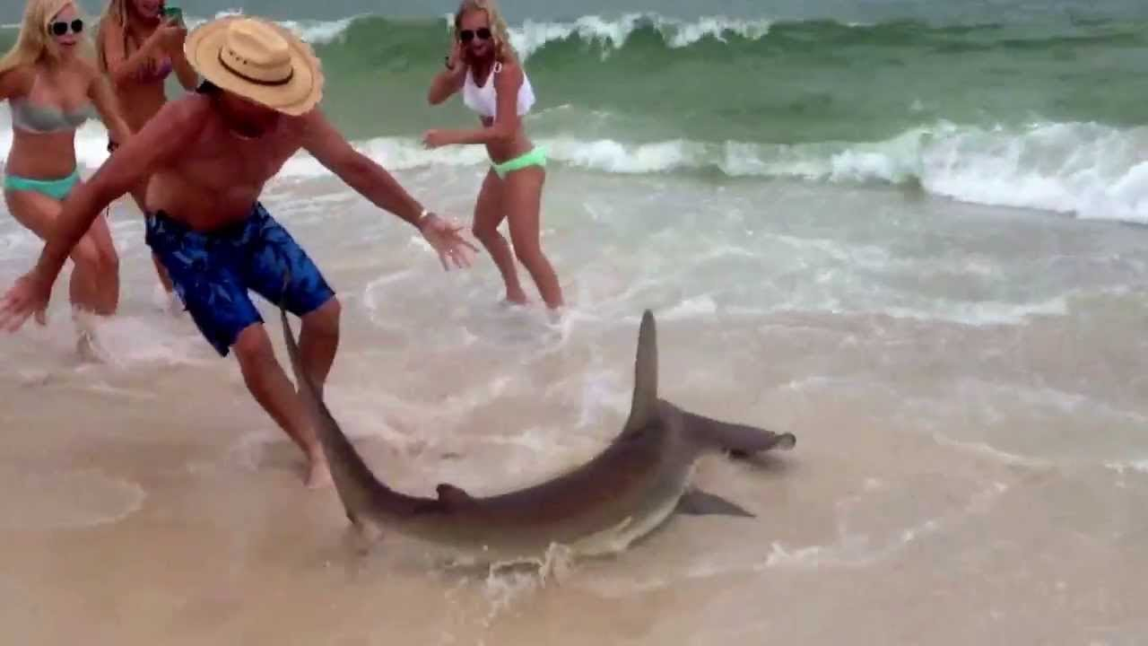 3 500 Pound Great White Shark Spotted In Lowcountry Waters