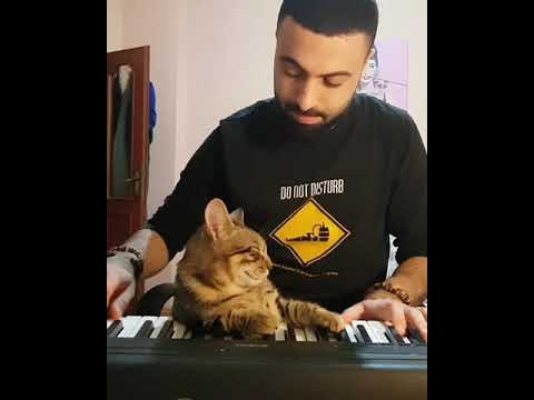 """""""We Are Working For Our New Composition With The Pianist Cat: """"2 Hand 2 Paws""""😂😹🎹🎶"""""""