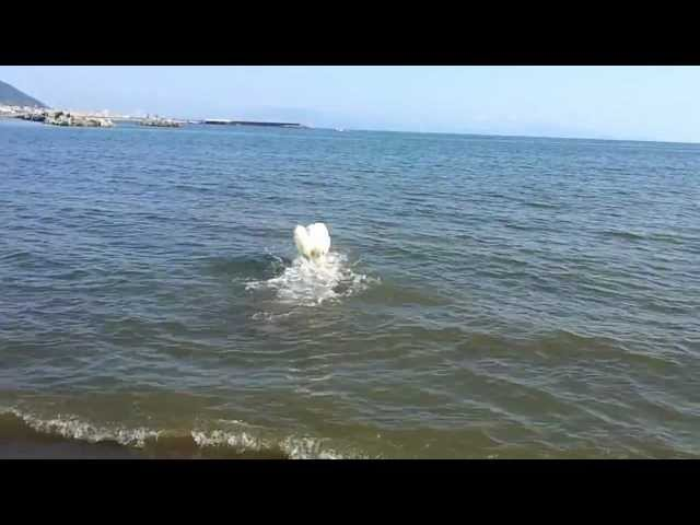 Lucy corre in mare