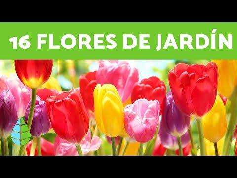 16 PLANTAS de SOL - FLORES para EXTERIORES