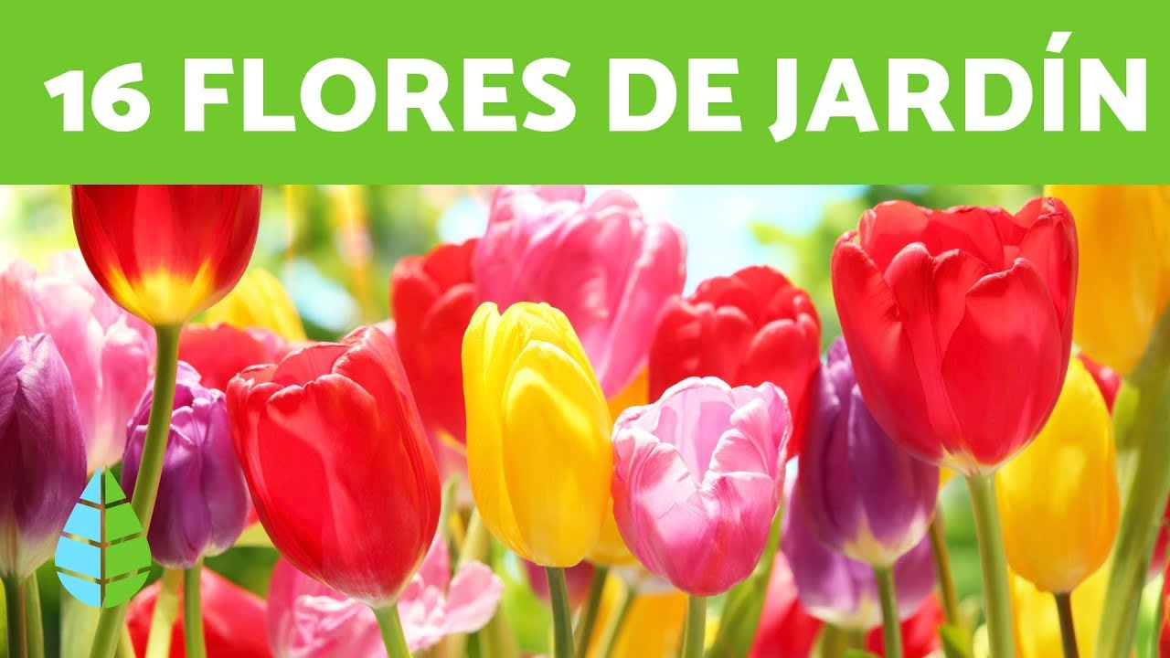 16 Plantas De Sol Flores Para Exteriores