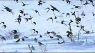 "Rued Langgaard: Symphony #2 ""Awakening of Spring"", BVN 53 - II Lento religioso quasi adagio"