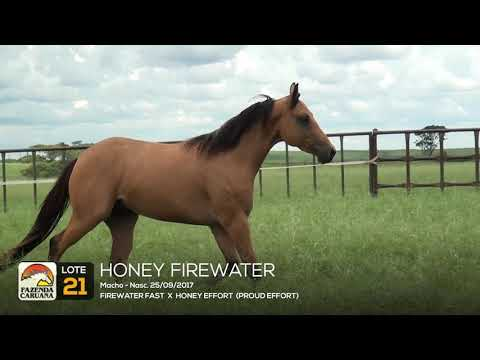 LOTE 21 - HONEY FIREWATER
