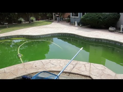 how to clean a green saltwater pool