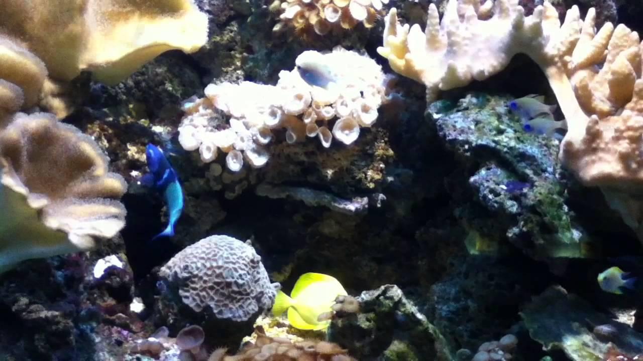 Acquario di cattolica pesci percorso blu youtube for Blu di metilene acquario