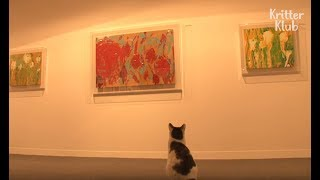 Cat Appreciates The Meowsterpiece  | Kritter Klub