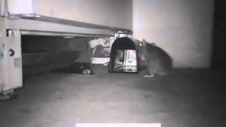 видео Ловушки для тараканов: клеевые, электрические, ультразвуковые