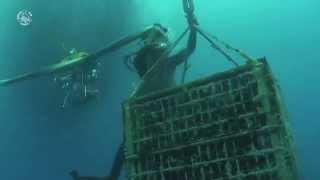 Underwater wine - Vino subacqueo