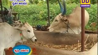 Narrowcastbengaluru 02-12-2015 - Krishidarshan - Kannada