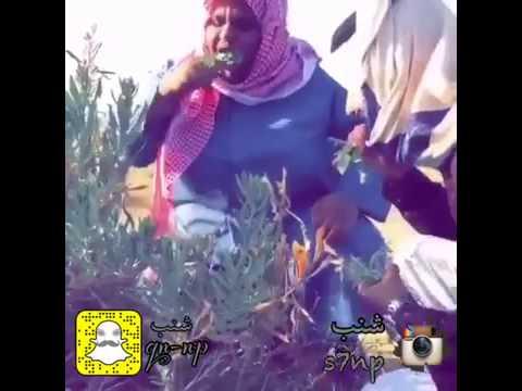 مقاطع مضحكه 2016 مقطع مضحك humorous video جميع مقاطع انستقرام شنب s7np المضحك