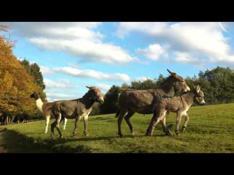 Daun, Germany Wildlife Park 10-18-12