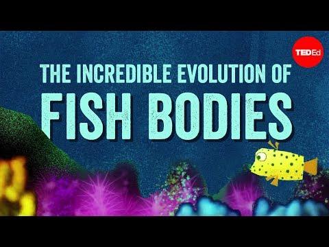 The incredible evolution of fish bodies - Lauren Sallan